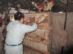 8/24 5:15 農作業体験!卵を頂き…